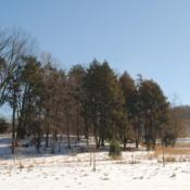 Location: Valley Forge Park near Norristown, PADate: 2014-01-30group in park in winter