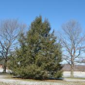 Location: Downingtown, PennsylvaniaDate: 2007-02-03tree planted in park