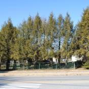 Location: Downingtown, PennsylvaniaDate: 2010-01-14line of trees in yard