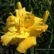 Location: Private Daylily Garden, MIDate: 2005-08-06