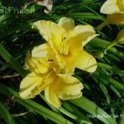 Location: Private Daylily Garden, MIDate: 2004-07-24