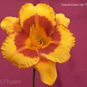 Location: SE Michigan Daylily Society ShowDate: 2009-07-18