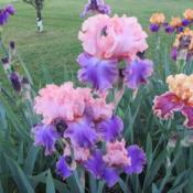 Location: My Garden in Janesville, WIDate: 2016-05-28