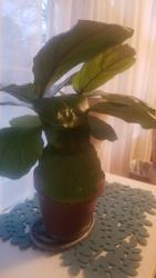 Thumb of 2018-01-28/RaenotRach/c3d942