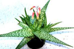 Thumb of 2018-01-28/ScotTi/eba80c