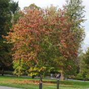 Location: Longwood Gardens in southeast PennsylvaniaDate: 2014-10-03tree with touch of fall color