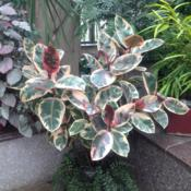 Location: Longwood Gardens Conservatory, Kennett Square, Pennsylvania USADate: 2018-01-29