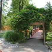 Location: Norristown, Pennsylvania at zooDate: 2012-08-04vine on trellis