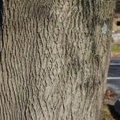 Location: Downingtown, PennsylvaniaDate: 2010-12-09bark