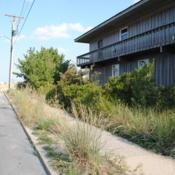 Location: Rehoboth Beach, DelawareDate: 2010-09-08Beachgrass in parkway and side yard