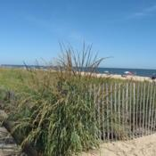 Location: Rehoboth Beach, DelawareDate: 2007-09-24full-grown grass at corner of fence