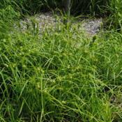 Location: Morton Arboretum in Lisle, IllinoisDate: 2015-06-19close-up of plants