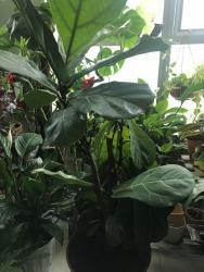 Thumb of 2018-02-20/neetchua/b9a9aa