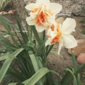 Location: my garden, PolandDate: 2016-04-18
