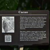 Location: Botanical Gardens of the State of Georgia...Athens, GaDate: 2018-03-07Cacao Information