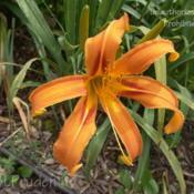Location: Private Daylily Garden, MIDate: 2006-07-21