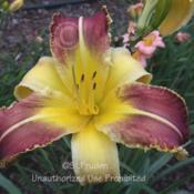Location: Private Daylily Garden, MIDate: 2006-07-28