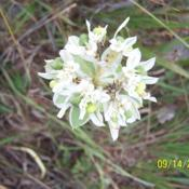 Location: ColoradoDate: 2006-09-14wildflower