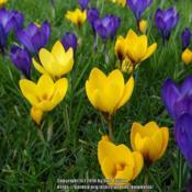 Location: Wallington Hall, Northumberland UKDate: 2017-03-07