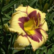 Location: Private Daylily Garden, MIDate: 2009-07-26