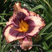 Location: Private Daylily Garden, MIDate: 2005-08-01