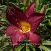 Location: Private Daylily Garden, MIDate: 2009-07-30