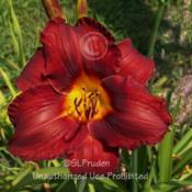 Location: Private Daylily Garden, MIDate: 7-2008