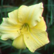 Photo courtesy of Valley of the Daylilies