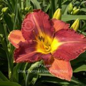 Location: Private Daylily Garden, MIDate: 2005-07-08