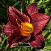 Location: Private Daylily Garden, MIDate: 2006-07-29