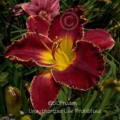Location: Private Daylily Garden, MI (DKP)Date: 2008-08-09