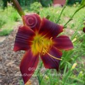 Location: Private Daylily Garden, MI (DKP)Date: 2004-07-31