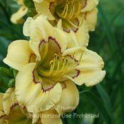 Location: Private Daylily Garden, MI (DKP)Date: 2006-07-19