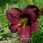 Location: Private Daylily Garden, MI (DKP)Date: 2004-07-23