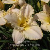 Location: Private Daylily Garden, MI (DKP)Date: 2005-08-06
