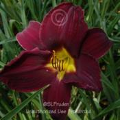 Location: Private Daylily Garden, MI (DKP)Date: 2009-07-30