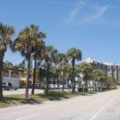 Location: Lauderdale By The Sea, FloridaDate: 2018-03-25palms planted in a long strip in avenue