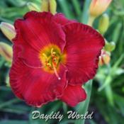 Photo courtesy of Daylily World