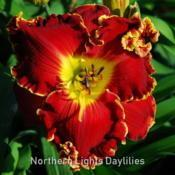 Date: 2009-05-09Photo courtesy of Northern Lights Daylilies