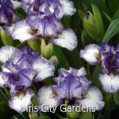 Photo courtesy of Iris City Gardens