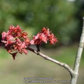 Location: In my garden, Falls Church, VADate: 2018-03-18March 2018