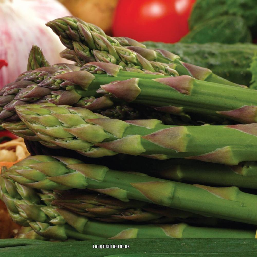 Photo of Asparagus (Asparagus officinalis 'Jersey Giant') uploaded by Joy