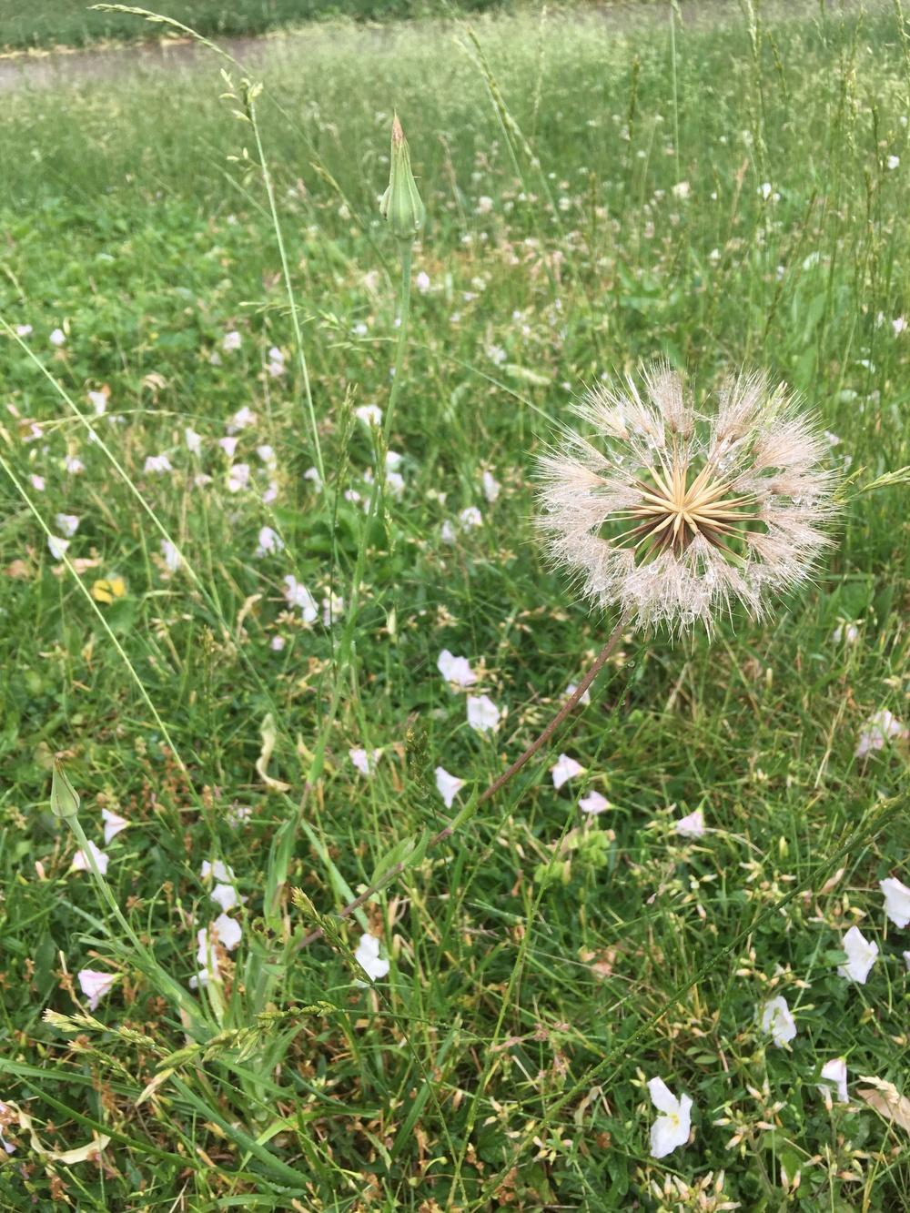 Plant Id Forum Strange Yellow Flower Weed Sprang Up On Lawn