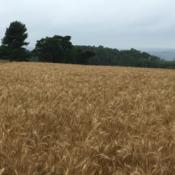 Location: My field, Pequea, Pennsylvania, USADate: 2018-06-27