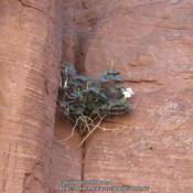 Location: Canyon de Chelly, AZDate: 2010-07-16