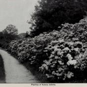 Date: c. 1913photo from the 1913 cherry Hill Nurseries catalog, West Newbury,