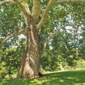 Location: Chadds Ford at Brandywine Battlefield Park, PADate: 2018-08-10trunk