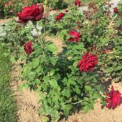 Location: Longwood Gardens, Kennett Square, Pennsylvania, USADate: 2018-08-27