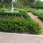 Location: Cantigni Gardens in Wheaton, IllinoisDate: 2018-08-24used as unclipped low hedge