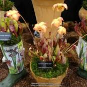 Location: Harrogate Autumn Flower show, YorkshireDate: 2018-09-15Wack's Wicked Plants exhibit